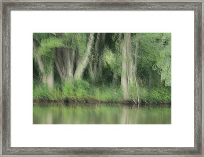 Painted Forest  Framed Print by Karol Livote