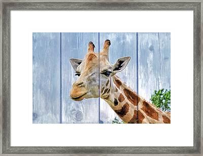 Painted Giraffe For Kids Room Framed Print
