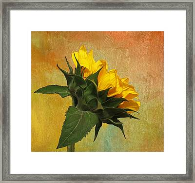 Framed Print featuring the photograph Painted Golden Beauty by Judy Vincent