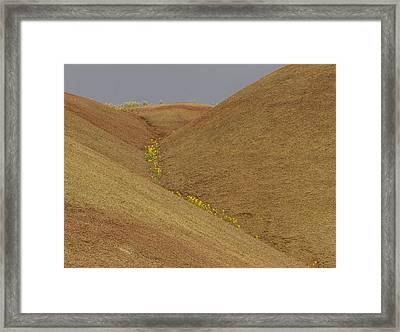 Painted Hills Balsam Framed Print by Jean Noren