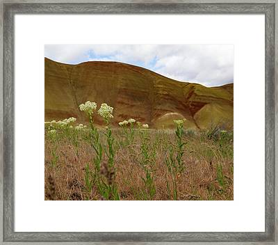 Painted Hills White Wildflowers Framed Print by Jean Noren