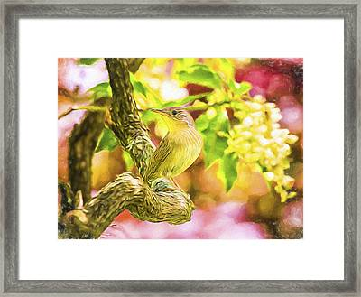Painted House Wren Framed Print by Daphne Sampson