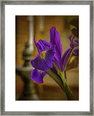 Painted Iris Framed Print by Dave Bosse