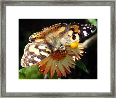 Painted Lady - Pit Stop 1 Framed Print by Esther Brueggemeier