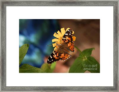 Framed Print featuring the photograph Painted Lady Butterfly by Eva Kaufman