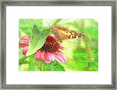 Painted Lady Butterfly On Cone Flower Framed Print