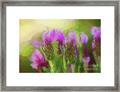 Painted Lavender Sunset By Kaye Menner Framed Print