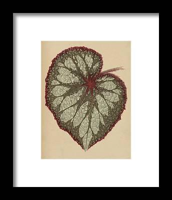 Leaf Venation Framed Prints