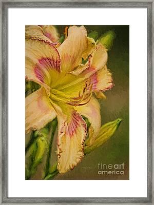 Painted Lilly Framed Print by Deborah Benoit