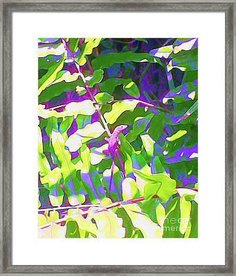 Painted Lizard Framed Print by Chris Andruskiewicz