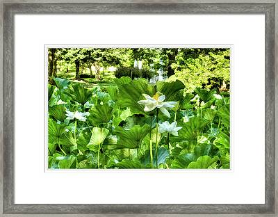 Painted Lotus Garden Framed Print by Geraldine Scull