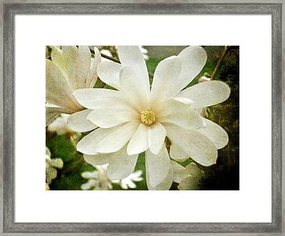 Painted Magnolia Framed Print