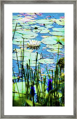 Framed Print featuring the mixed media Painted North American White Water Lily by Onyonet  Photo Studios