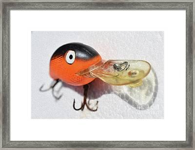 Painted Orange Diver Framed Print