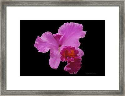 Framed Print featuring the photograph Painted Orchid by Phyllis Denton