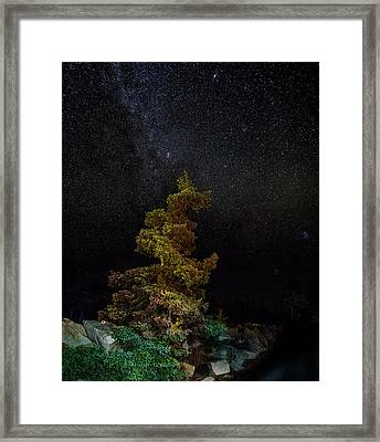 Painted Pine Framed Print by Brent L Ander