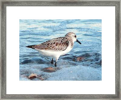 Painted Piper Framed Print by Margie Avellino