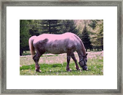Framed Print featuring the photograph Painted Pony by Susan Carella