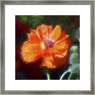 Painted Poppy Framed Print