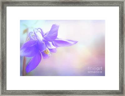 Painted Purple Columbine Framed Print