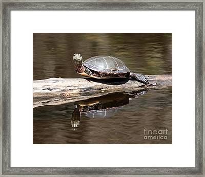 Painted Reflection Framed Print