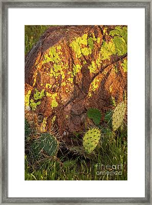 Painted Rock Framed Print by Iris Greenwell