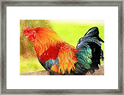 Painted Rooster Framed Print by Geraldine Scull