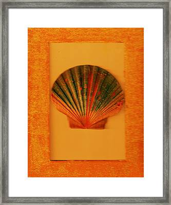 Painted Shell II Framed Print by Anne-Elizabeth Whiteway