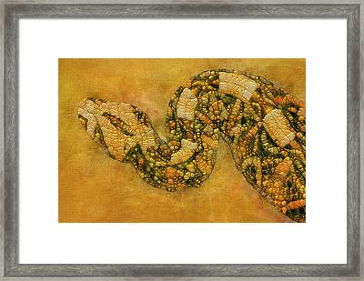 Painted Snake Framed Print by Jack Zulli
