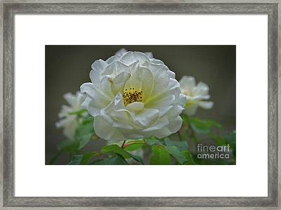 Painted Spring Camilia Framed Print