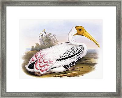 Painted Stork Framed Print by John Gould