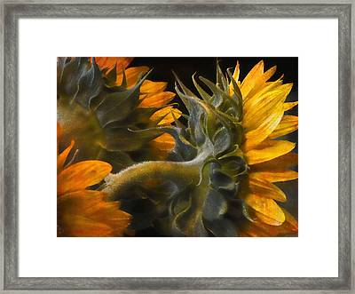 Framed Print featuring the photograph Painted Sun Flowers by John Rivera