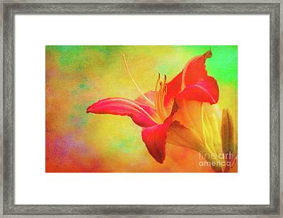 Painted Tammas Daylily Framed Print