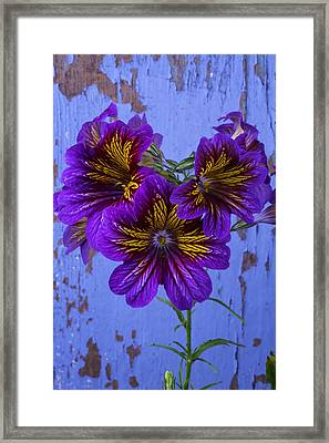 Painted Tongue Against Blue Wall Framed Print by Garry Gay
