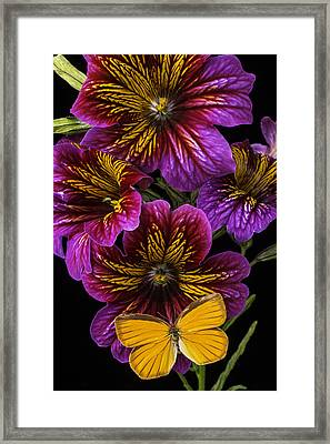 Painted Tongue With Orange Butterfly Framed Print by Garry Gay