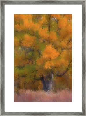 Painted Tree Framed Print