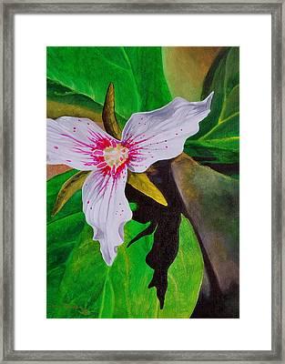Painted Trillium Framed Print