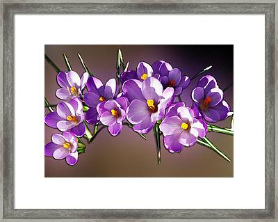 Framed Print featuring the photograph Painted Violets by John Haldane