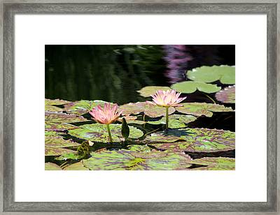 Painted Waters - Lilypond Framed Print