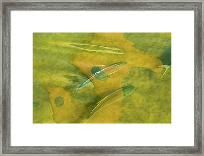 Framed Print featuring the photograph Painterly Fish by Carolyn Dalessandro