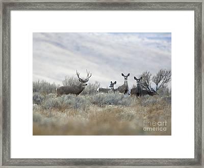 Painting Framed Print