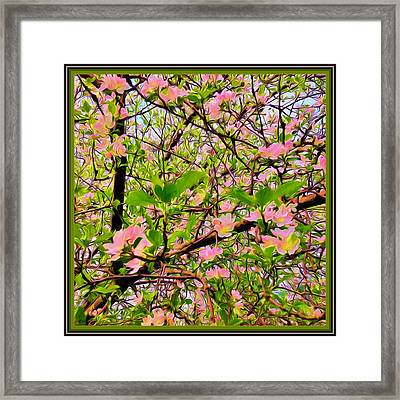 Painting Of Apple Blossoms Framed Print