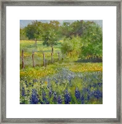 Painting Of Texas Bluebonnets Framed Print