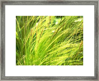 Painting The Wildgrass Framed Print by Jean Booth