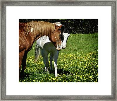 Paints And Buttercups Framed Print
