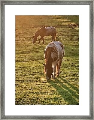 Paints Backlit Framed Print