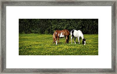 Paints N Buttercups 2 Framed Print