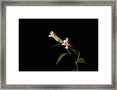 Pair Framed Print by Deepak Pawar