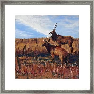 Pair O' Bulls Framed Print