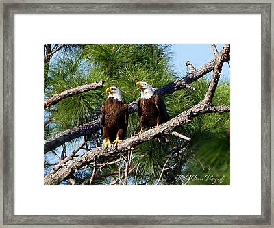 Framed Print featuring the photograph Pair Of American Bald Eagle by Barbara Bowen